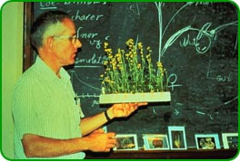 Dr. Williams holding a tray of Brassica Fast Plants in bloom.