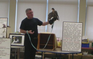 Wingmaster with Peregrine Falcon